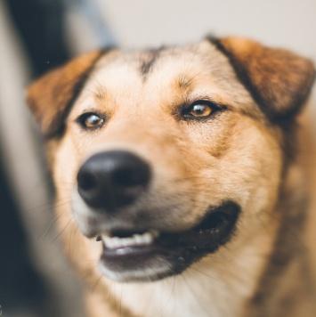 Карри - Собаки в добрые руки