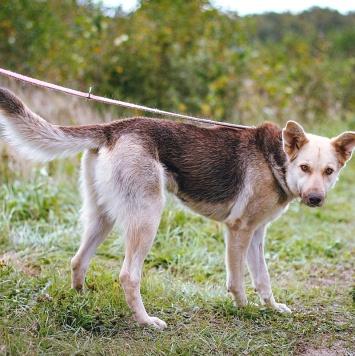 Керри - Собаки в добрые руки