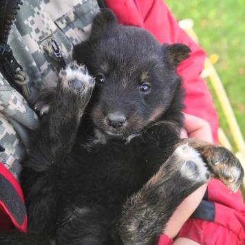 Найденыши - Собаки в добрые руки