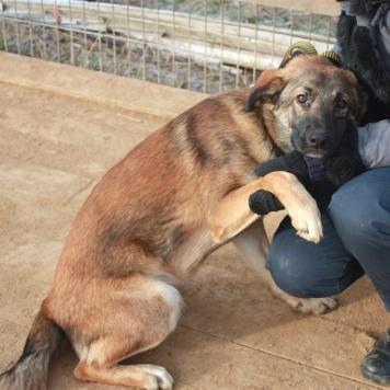 Лариончик - Собаки в добрые руки