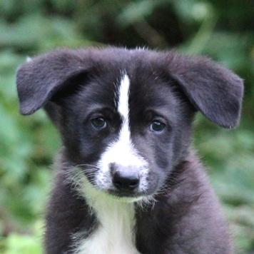 Клара - Собаки в добрые руки