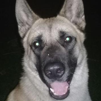 Тайвар - Собаки в добрые руки