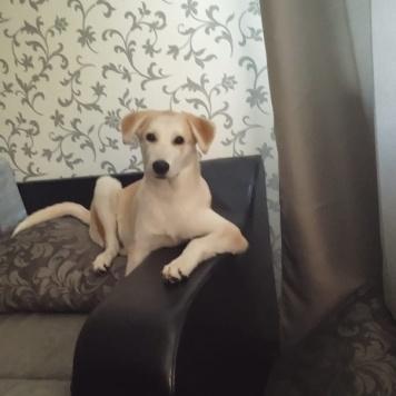 Шуц - Собаки в добрые руки