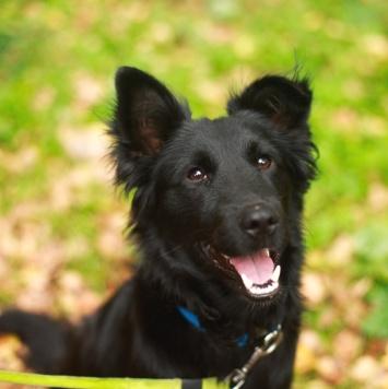 Вольт - Найденные собаки