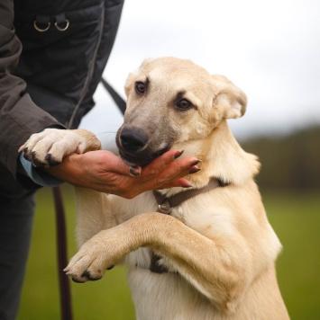 Зефирка - Собаки в добрые руки