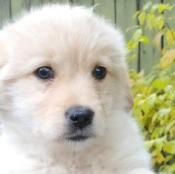 Челси - Собаки в добрые руки