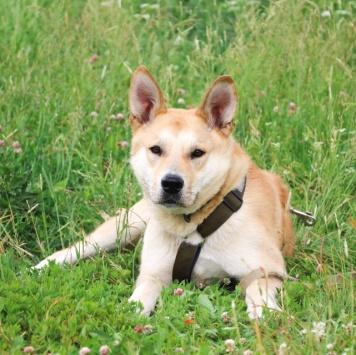 Шакос - Собаки в добрые руки