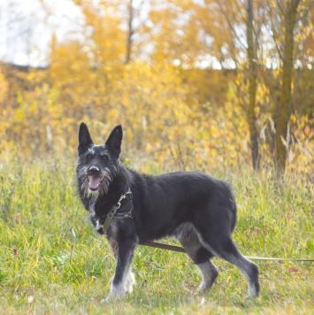 Тузик (Вир) - Собаки в добрые руки