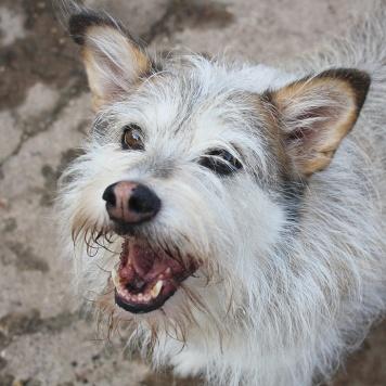 Попка - Собаки в добрые руки