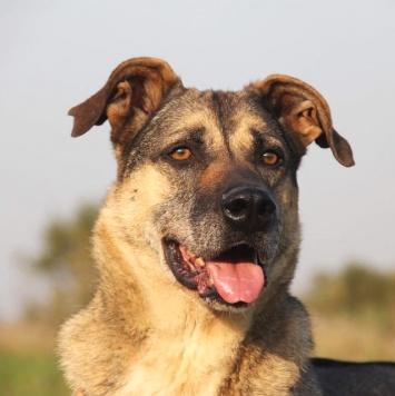 Федор - Собаки в добрые руки
