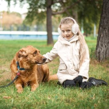 Рыжулькин - Собаки в добрые руки