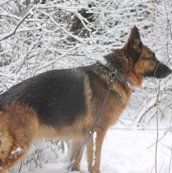 Жак - Собаки в добрые руки