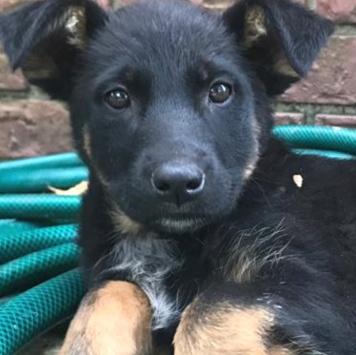 Зара - Собаки в добрые руки