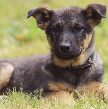 Зорро - Собаки в добрые руки