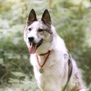 Ария - Собаки в добрые руки