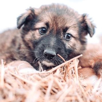 Мушкетёры - Собаки в добрые руки