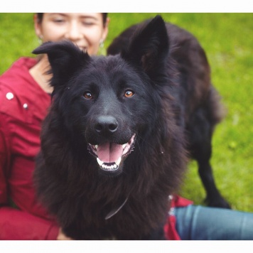 Тима - Собаки в добрые руки