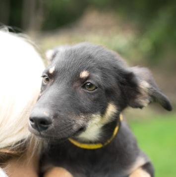 Найк - Собаки в добрые руки