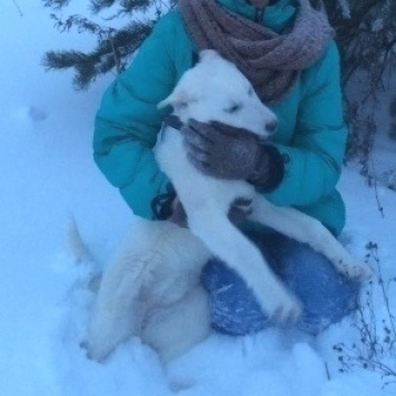 Сальма - Собаки в добрые руки