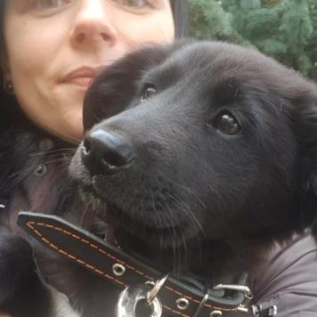 Черника - Собаки в добрые руки