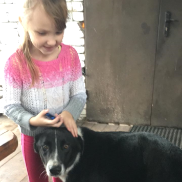 Причал - Собаки в добрые руки
