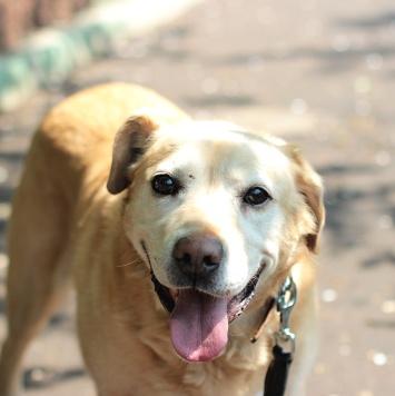 Ланселот - Собаки в добрые руки