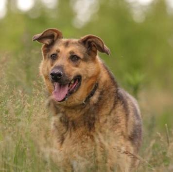 Евра - Собаки в добрые руки