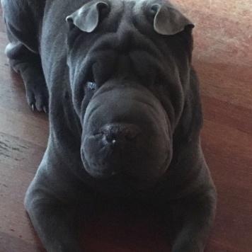 Бирон - Собаки в добрые руки