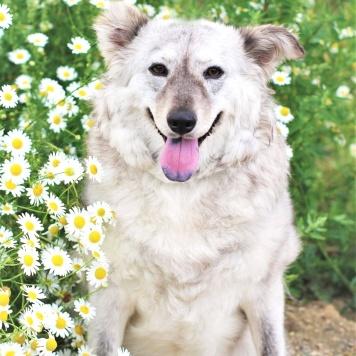 Габриель - Собаки в добрые руки