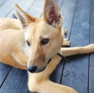 Пока без имени - Найденные собаки