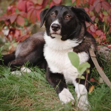 Шанни - Собаки в добрые руки