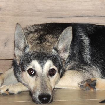 Вельга - Собаки в добрые руки