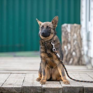 Самба - Собаки в добрые руки