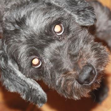 Вайс - Собаки в добрые руки