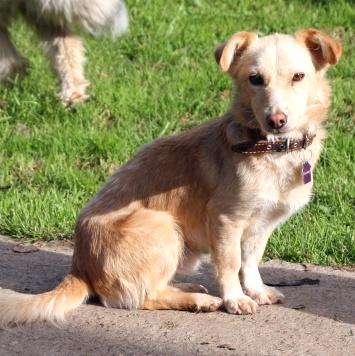 Абрикос - Собаки в добрые руки