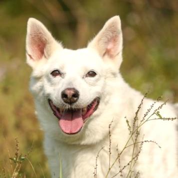 Пандочка - Собаки в добрые руки