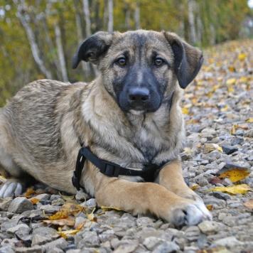 Рона - Собаки в добрые руки