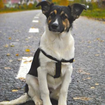 Волга - Собаки в добрые руки