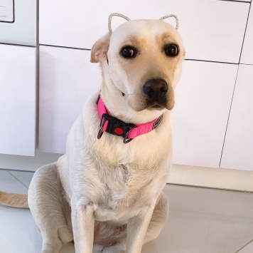 Эмили - Собаки в добрые руки