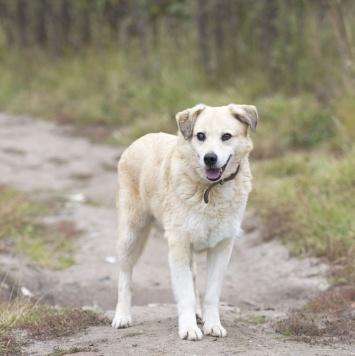 Джимм - Собаки в добрые руки