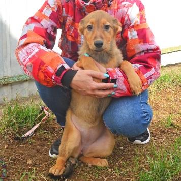 Бэбби - Собаки в добрые руки