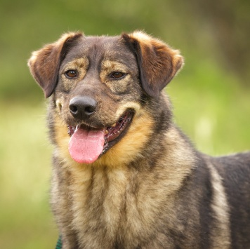 Баламут - Собаки в добрые руки