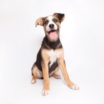 Джесс - Собаки в добрые руки