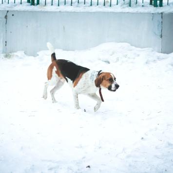 Бади - Собаки в добрые руки