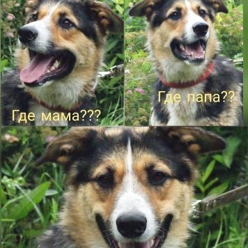 Рэд - Собаки в добрые руки