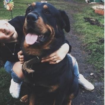 Рон - Пропавшие собаки