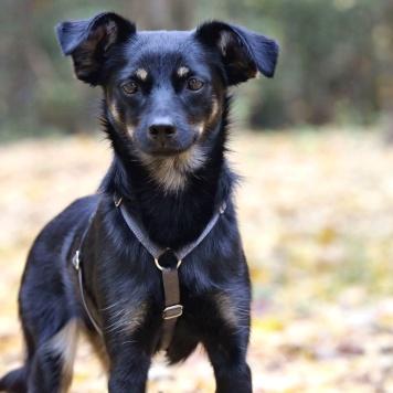 Иржик - Собаки в добрые руки