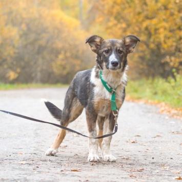 Винтик - Собаки в добрые руки