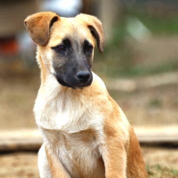 Армани - Собаки в добрые руки