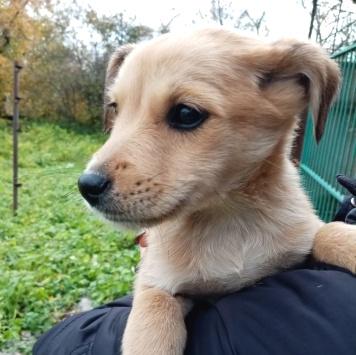 Люська - Собаки в добрые руки